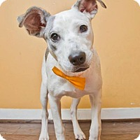Adopt A Pet :: Scout - Pearland, TX