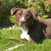 Adopt A Pet :: Zeus - Grand Island, NE