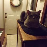 Adopt A Pet :: Don - Owatonna, MN