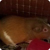 Adopt A Pet :: Carmel - Lancaster, PA