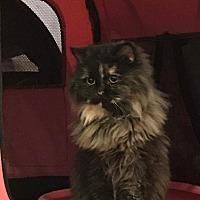 Adopt A Pet :: Lolo - Ennis, TX