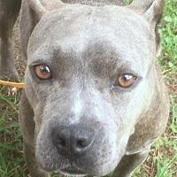 Adopt A Pet :: Darla - Murfreesboro, NC