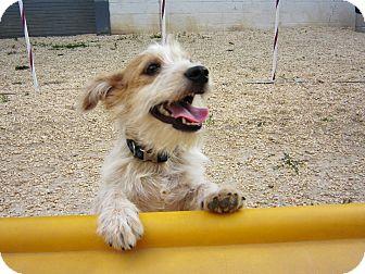 Terrier (Unknown Type, Small) Mix Dog for adoption in Philadelphia, Pennsylvania - mac