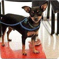 Adopt A Pet :: Peanut - Garland, TX