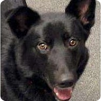 Adopt A Pet :: Fletcher - Palmyra, WI