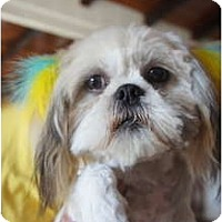 Adopt A Pet :: Peaches - Toluca Lake, CA