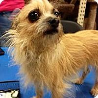 Adopt A Pet :: Gidget - Silsbee, TX