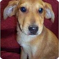 Adopt A Pet :: Duffy reduced - P, ME