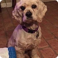 Adopt A Pet :: Mackenna - Sugarland, TX