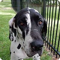 Adopt A Pet :: Squirrel - Sarasota, FL