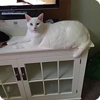 Adopt A Pet :: Jake - Denton, TX