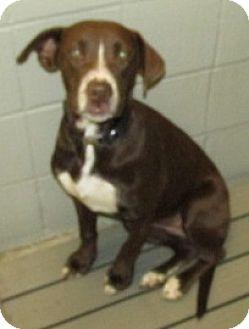 Retriever (Unknown Type) Mix Dog for adoption in Aiken, South Carolina - LEXI