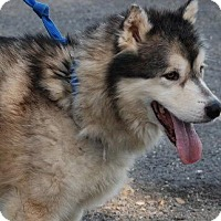 Adopt A Pet :: Oscar - Augusta County, VA