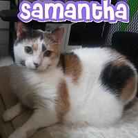 Adopt A Pet :: Samantha - Trevose, PA