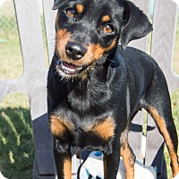 Adopt A Pet :: Ruby - Patterson, CA
