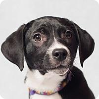 Adopt A Pet :: Heather - Minneapolis, MN