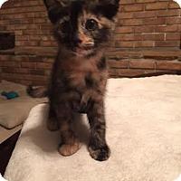 Adopt A Pet :: Duchess - Orlando, FL
