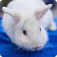 Adopt A Pet :: Lavender - Los Angeles, CA