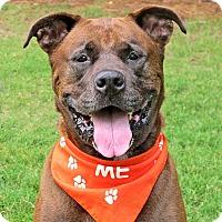 Adopt A Pet :: Rosa - Raleigh, NC