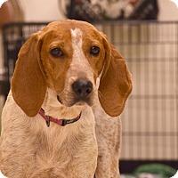 Adopt A Pet :: Jezebel - Flushing, MI