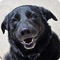 Adopt A Pet :: Jasmine - Kansas City, MO