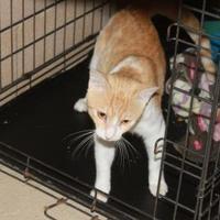 Adopt A Pet :: Garfield - Russellville, KY