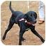 Photo 2 - Labrador Retriever Mix Dog for adoption in Preston, Connecticut - Boozer