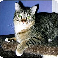 Adopt A Pet :: Skeeter - Medway, MA