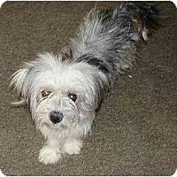 Adopt A Pet :: Lizzie - Gilbert, AZ