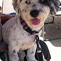 Adopt A Pet :: SADIE - Salt Lake City, UT