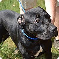 Adopt A Pet :: Mariah - Marshfield, MA