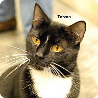 Adopt A Pet :: Tarzan - McDonough, GA
