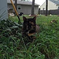 Adopt A Pet :: Beauty - Brunswick, OH
