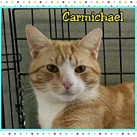 Adopt A Pet :: Carmichael - Atco, NJ