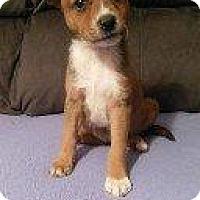 Adopt A Pet :: DELIAH - Hampton, VA