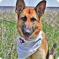 German Shepherd Dog Dog for adoption in Gretna, Nebraska - Farah