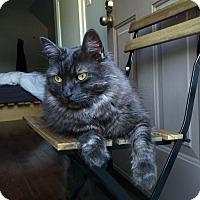 Adopt A Pet :: Wallace - Toronto, ON
