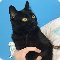 Adopt A Pet :: Creed - Hibbing, MN