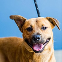 Adopt A Pet :: Tudor - San Diego, CA