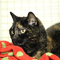Adopt A Pet :: Nibbles - Mission, BC
