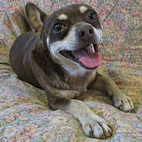 Adopt A Pet :: Dobie - Melbourne, AR