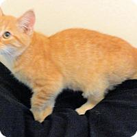 Adopt A Pet :: Edgar - Morganton, NC