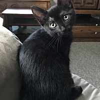 Adopt A Pet :: Ashleigh - Lockport, NY