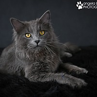Adopt A Pet :: Cole - Eagan, MN