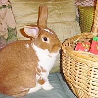 Adopt A Pet :: BLAZE - Newport, KY
