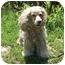 Photo 2 - Cocker Spaniel Dog for adoption in Overland Park, Kansas - Amanda