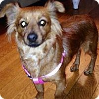 Adopt A Pet :: Summer - Los Angeles, CA