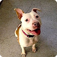 Adopt A Pet :: Tempest - Seattle, WA