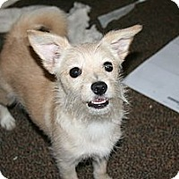 Adopt A Pet :: Fluffy - Westfield, IN