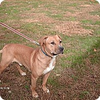 Adopt A Pet :: Jake - South Windsor, CT